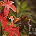 Leafy by Kim Henderson