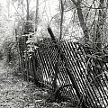 Leaning Fence by Mary Almond