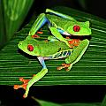 Leap Frog by Harry Spitz