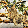Leaping Leopard by Kristin Elmquist