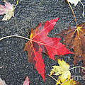 Leave The Leaves by Donato Iannuzzi