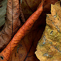 Leaves After Braque by Steven Durland