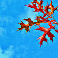 Leaves Against The Sky by Judi Bagwell