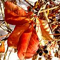 Leaves And Small Berries  by Beth Akerman