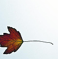 Leaves Five  by Ken Frischkorn