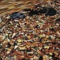 Leaves Floating On River Water by Adrian Bicker