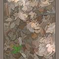 Leaves by George Schiavone