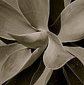 Leaves II - Mono by Dickon Thompson