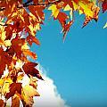 Leaves In The Sky by Lee Yang