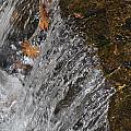 Leaves In The Water by Denise Ellis