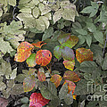 Leaves Of Three   Let It Be by Elaine Mikkelstrup