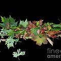 Leaves On Sidewalk by Martin Brockhaus