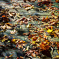 Leaves On The Boardwalk by David Patterson