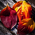 Leaves On The Deck by David Patterson