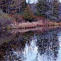 Leaves On Water by LeeAnn McLaneGoetz McLaneGoetzStudioLLCcom