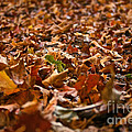 Leaves by Susan Herber