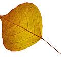 Leaves Ten  by Ken Frischkorn