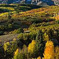 Leaves Turning At Dallas Divide by Greg Nyquist