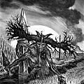Leeching The Soil by Tony Koehl