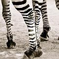 Legs by Stephanie Fenton