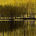 Lemon Lake by The Artist Project