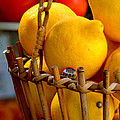 Lemons  by Caroline Stella
