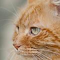 Leo The Kitty Beast by Greg Nyquist
