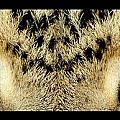 Leopard Eyes by Sumit Mehndiratta