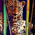 Leopard by Gabriele Ervin