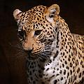 Leopard I by Jai Johnson
