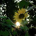 Let The Sun Shine by Ericamaxine Price