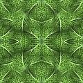 Lettuce Live Green  by Sue Duda
