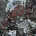 Lichen Abstract II by Susan Capuano