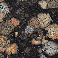 Lichen Abstract by Susan Capuano