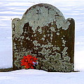Lichen Tombstone by Catherine Conroy