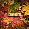 Life-autumn by  Onyonet  Photo Studios
