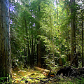 Light At Play In The Forest by Endre Balogh