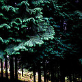 Light Forest by Edgar Laureano