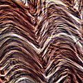 Light Micrograph Of Smooth Muscle Tissue by Eric Grave