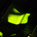 Light On Banana Leaves by Phil Penne