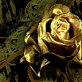 Light Painted Rose by Ronel Broderick