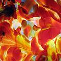 Light Shade by Amy Hosp