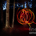 Light Writing In Woods by Ted Kinsman