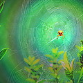 Lightning Spider by Helmut Rottler