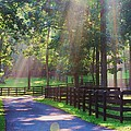 Lightray Farm by TSC Photography Timothy Cuffe Jr