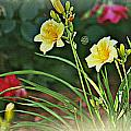 Lilies And Roses by Debbie Sikes