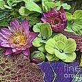Lilies No. 33 by Anne Klar
