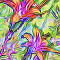 Lilies Transformed by Ian  MacDonald