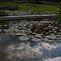 Lillies And Clouds by Mike Reid
