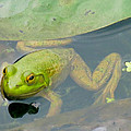 Lily Frog by Azthet Photography